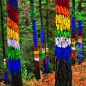 bosque oma escapada niños