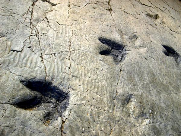 dinosaurios Enciso ruta