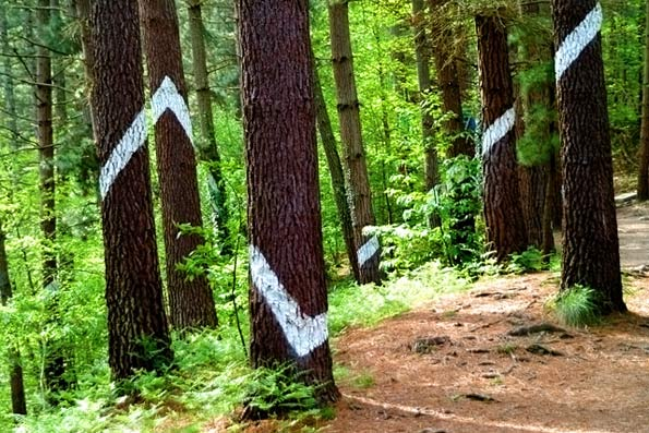 bosque_oma_niños-escapada-planes