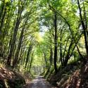 Vía Verde Galdames Bizkaia