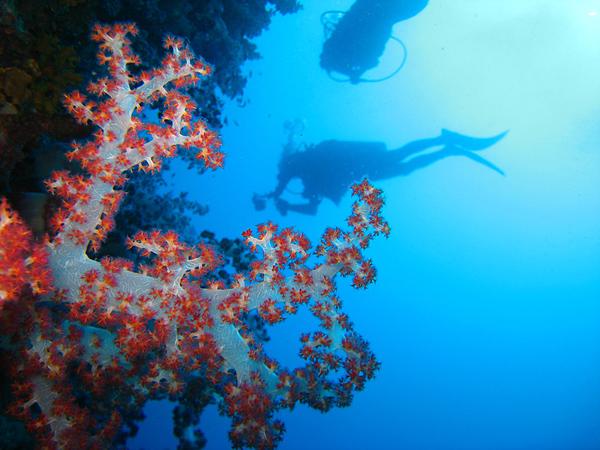 Buceo Submarinismo Bizkaia