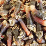 mejor-restaurante marisco zabala getxo